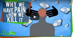 Why We Have Pain & How We Kill It